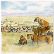 Safari Square Plate - Small