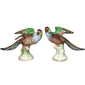 Mottahedeh Parakeets Pair