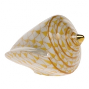 Cone Shell Butterscotch