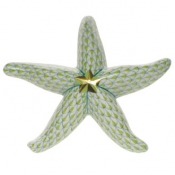 Starfish Key Lime