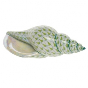 Tulip Shell Key Lime